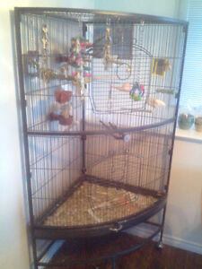 Two beautiful cockatiels for sale