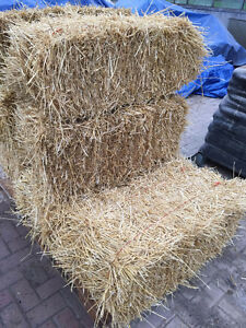 Dry Straw Bales For Sale
