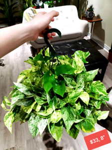 Indoor plant, plants for sell