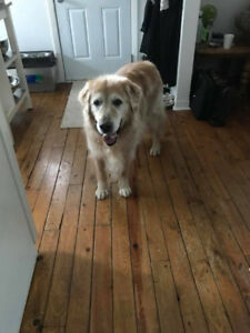 OVLPN - Lost dog in La Peche East Aldfield