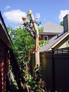 Quick acting Tree Service and Storm clean up Peterborough Peterborough Area image 2