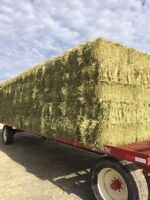 2015 hay for sale