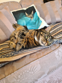 Cat feeding and care service in Islington and surrounding areas