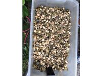 Wood chippings free to collector