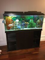 50 gallon tank, stand and accessories