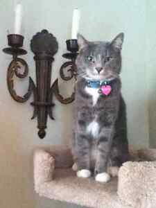 Lost Cat in Canmore