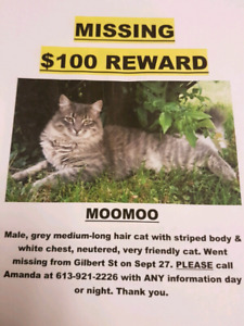 Helping lost cats. MUST READ!!!