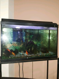 Aquarium fish tank for only 50$