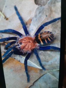 I have a couple spiders for sale