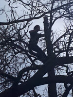 The Tree Whisperer - Pruning season is Here!