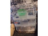 Cage and tan and white make Syrian hamster
