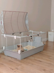 Lapin. Et cage