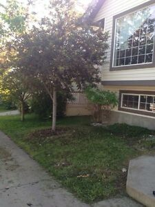 Landscaping and house cleaning services Edmonton Edmonton Area image 2