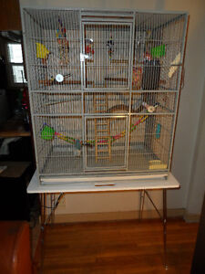 Large Bird Cage (Plus Oodles of Extras!)