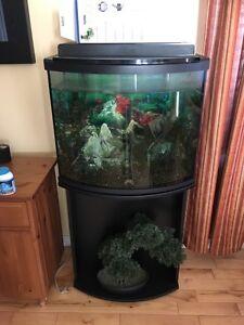 Aquarium 20 gallons Saguenay Saguenay-Lac-Saint-Jean image 1