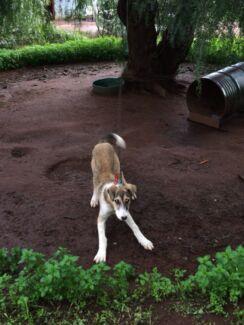 Hunting dog Boree Creek Urana Area Preview