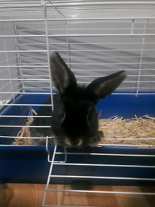 Female bunny with cage