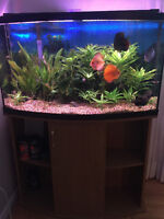 4 discus for sale
