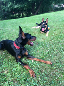 The BEST! Qualified & Dependable Dog Sitter & Boarding!