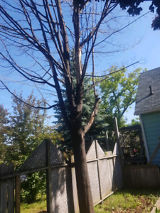 Tree removal service free quotes