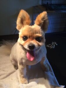 Paws Fur Effects PET GROOMING !!