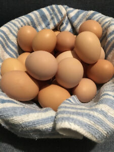 Farm eggs for sale
