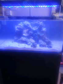 3ft 300+ litre marine tank with fish and live rock and sump