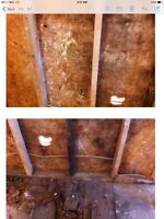 Certified Mould inspector- air testing & Ozone Treatment