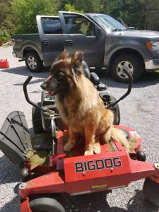 Lawn maintenance, tree work and stuff around the yard