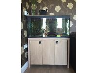 Fluval 200l Aquarium With Cabinet and Lots Of Extras