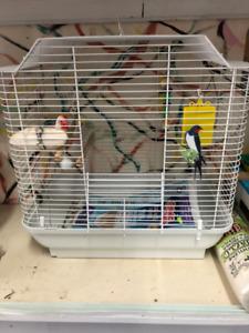 Cage d'oiseau avec accessoires