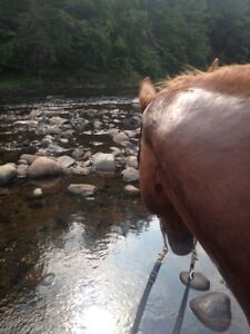 Horse Leasing unlimited rides /Board/ lessons/ stunning trails