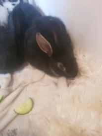 Females bunnies