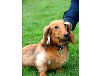 DOG WALKING, BOARDING, CAT SITTING, SMALL ANIMAL CARE, HAPPY PUPPY SERVICE / LONDON