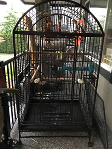 Large Parrot Cage - $200