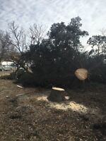 Tree cutting removal maintenance