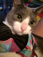 Cat lost , Gray and White shorthair Finch/Birchmount