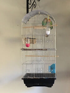 Pair of lovebirds and cage