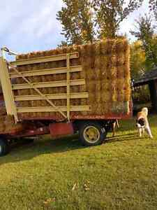 Dry square oat/ wheat straw bales