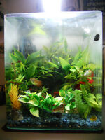 8 Gallon fish tank with accessories and fish