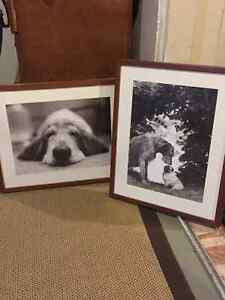 Large Pictures of Dogs Cambridge Kitchener Area image 1