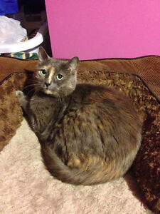 Lost Cat in DDO please help us find her!