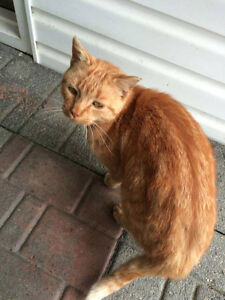 Very nice mature cat looking for a home