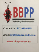 Pest control Services in Mississauga at Lowest prices