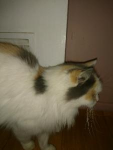 Free Cat needs loving home