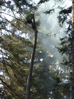 TREE CLIMBER REQUIRED BY TREE SERVICE COMPANY