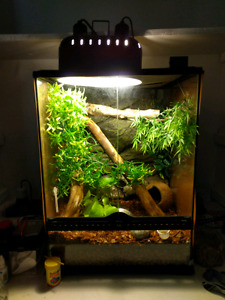 Crested Gecko with Terrarium and Heat Lamp