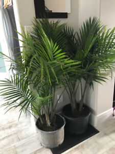 two plants for sale