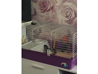 Ferplast guinea pig cages and rotostak hamster cage