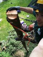 Arborist, professionally trained certified insured